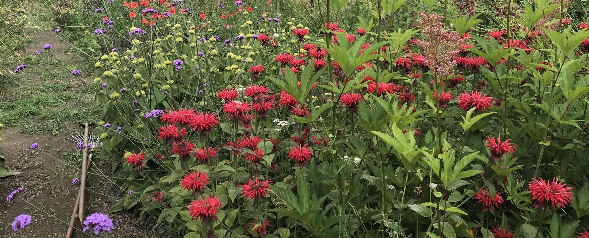 boerentuinbloemen